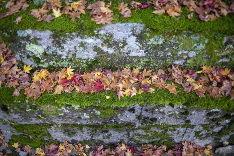 箸蔵山紅葉落ち葉とコケ
