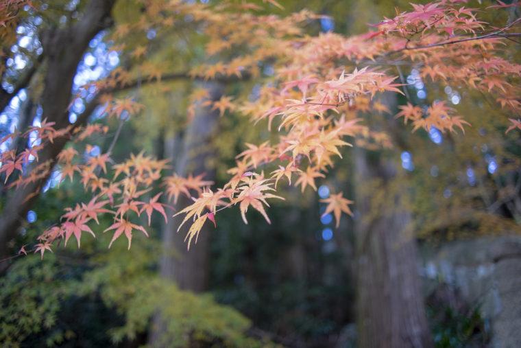 箸蔵山御本殿までの階段紅葉