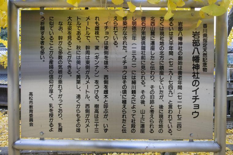 岩部神社のイチョウ説明