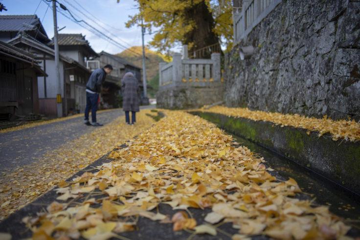 岩部神社のイチョウ