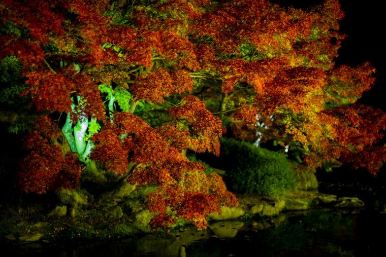 栗林公園の黄葉ライトアップ
