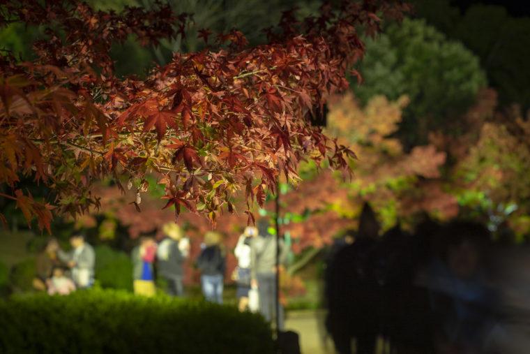 日暮亭前の紅葉
