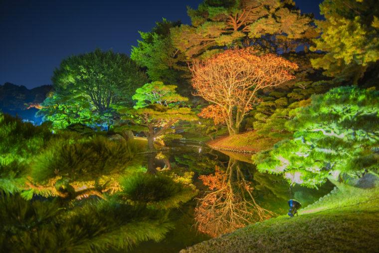 栗林公園の夜の紅葉