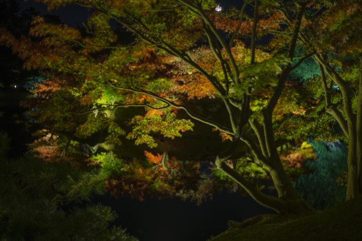 楓岸の紅葉2
