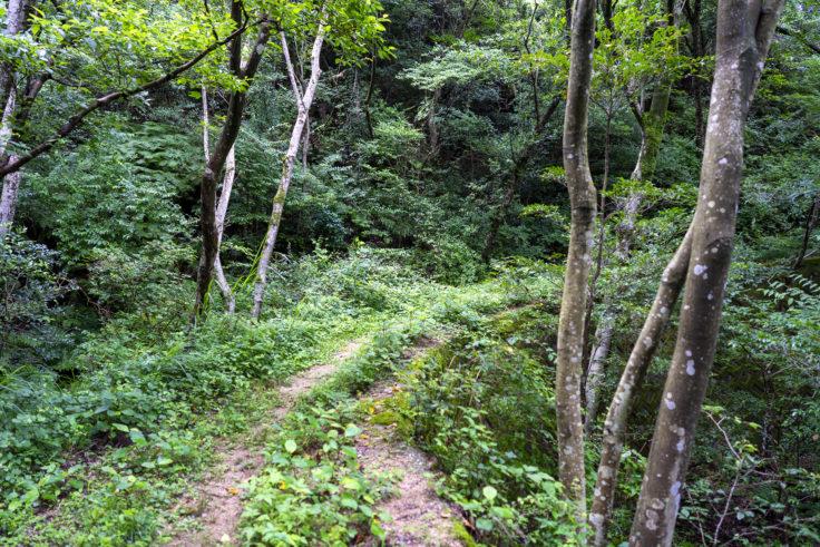 虎丸山の登山道