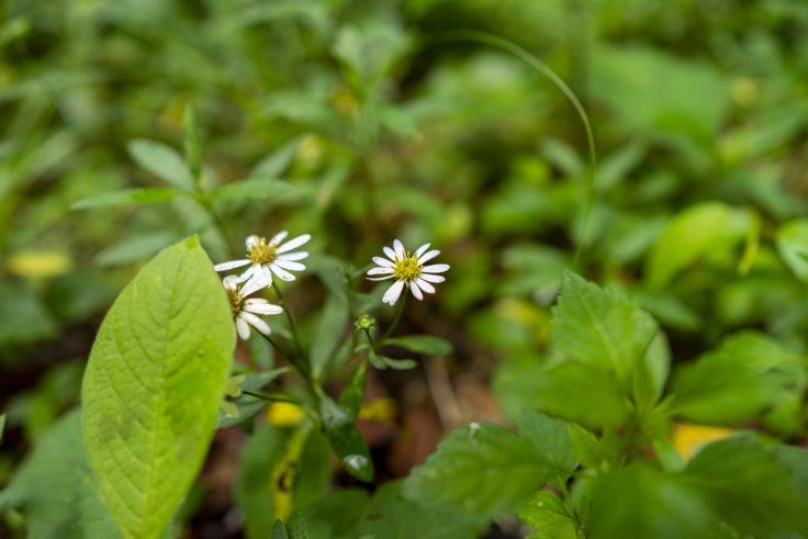 虎丸山の花