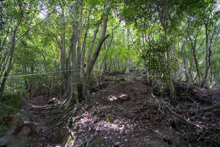 虎丸山の登山道2