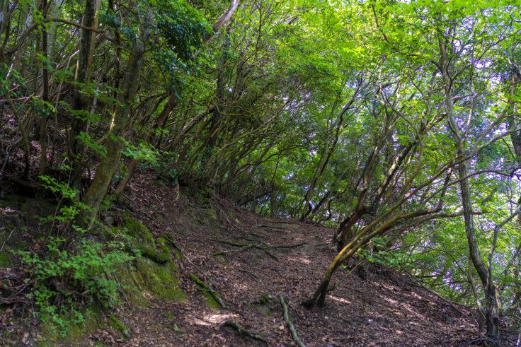 虎丸山の登山道3