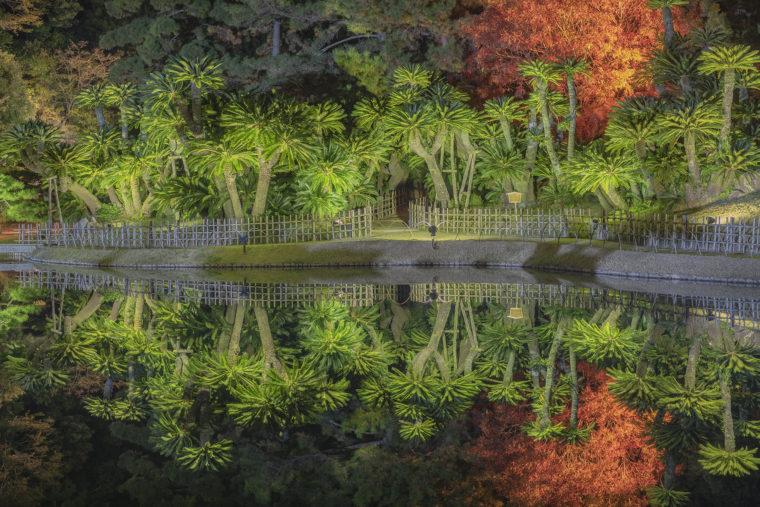 栗林公園のソテツ