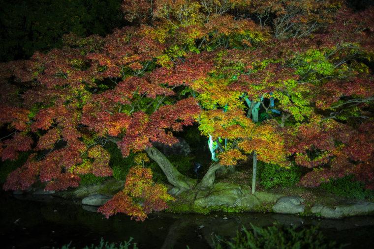 潺嵈池の紅葉引き