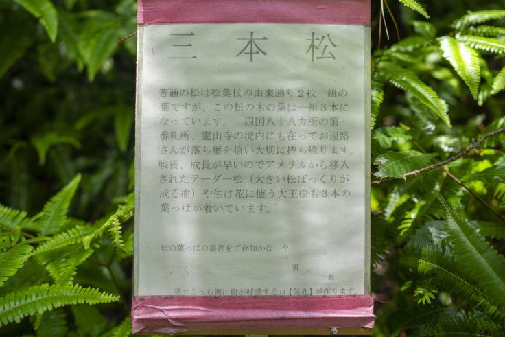 虎丸山三本松説明