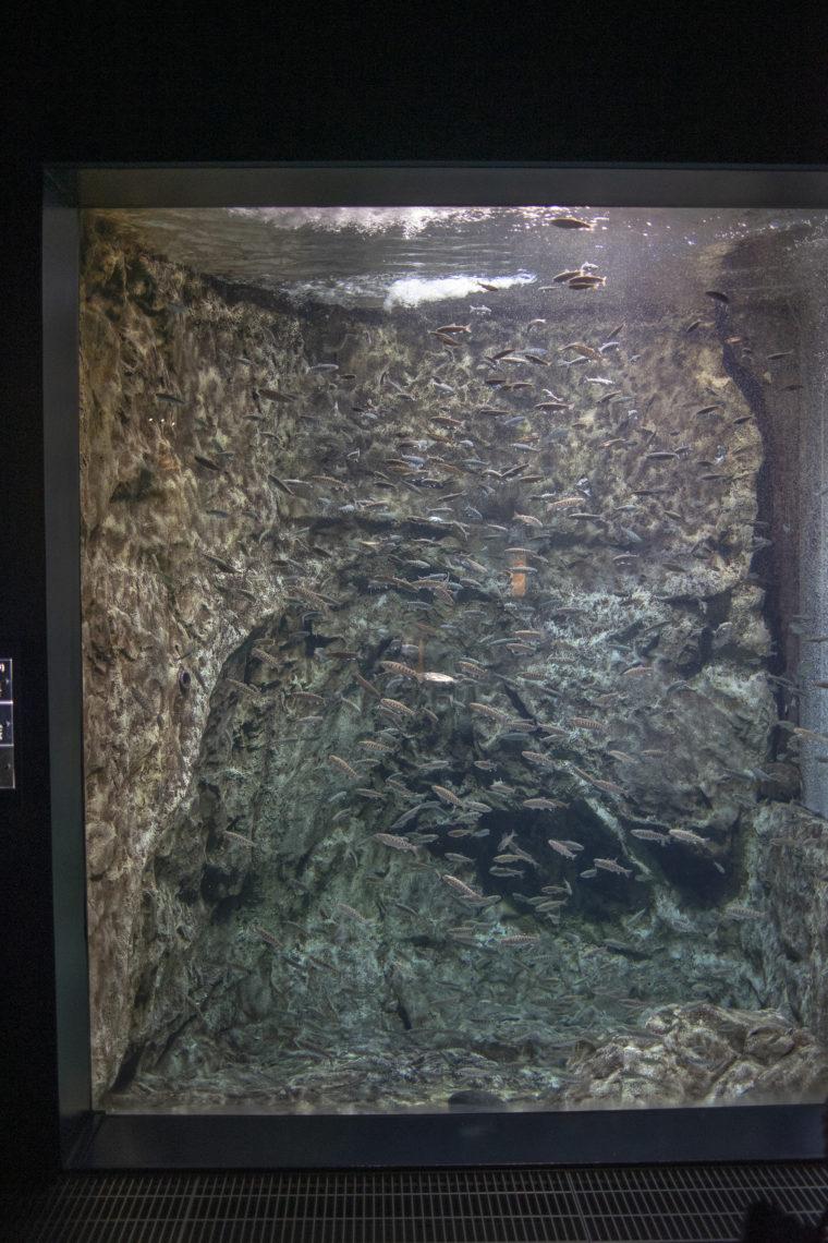 千歳水族館水槽2