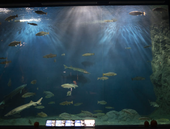 千歳水族館巨大水槽