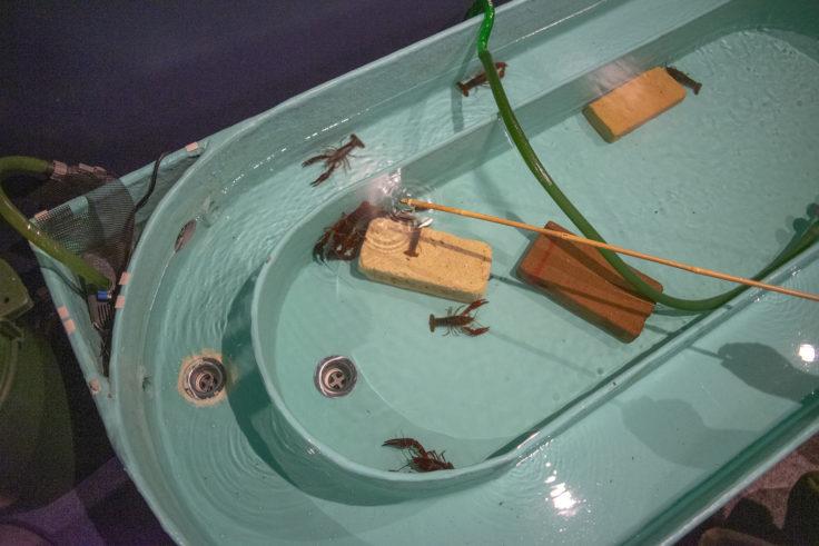 千歳水族館のザリガニ釣り