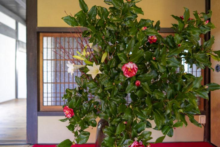 讃州井筒屋敷母屋の花