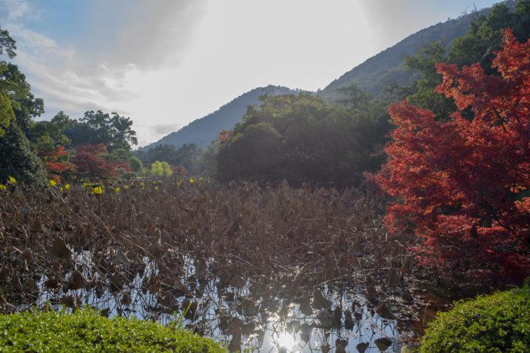 永代橋から見た芙蓉沼