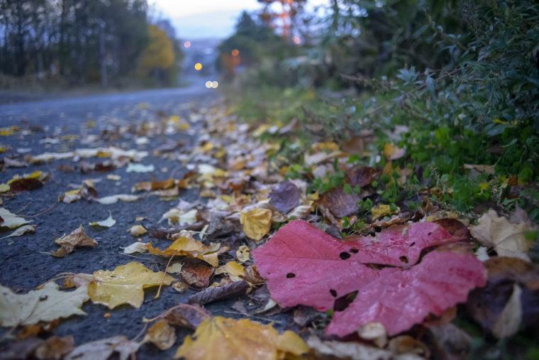 富良野の紅葉