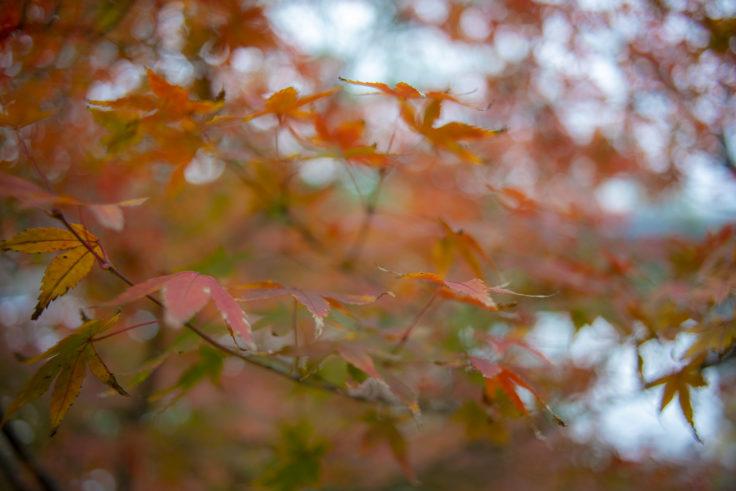 瀬戸大橋記念公園の紅葉