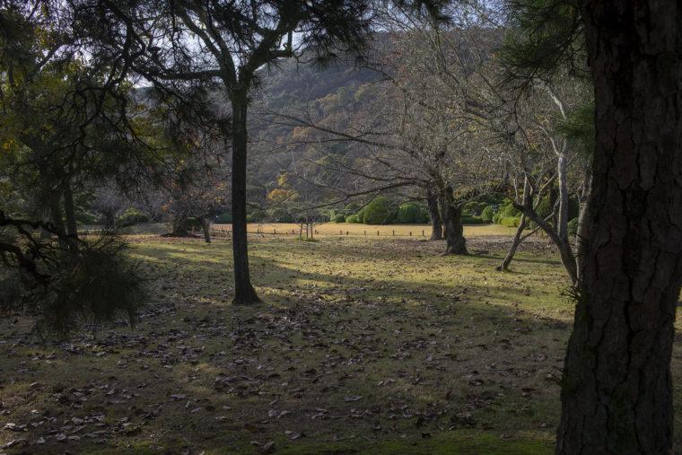 栗林公園の桜前線標本木裏側