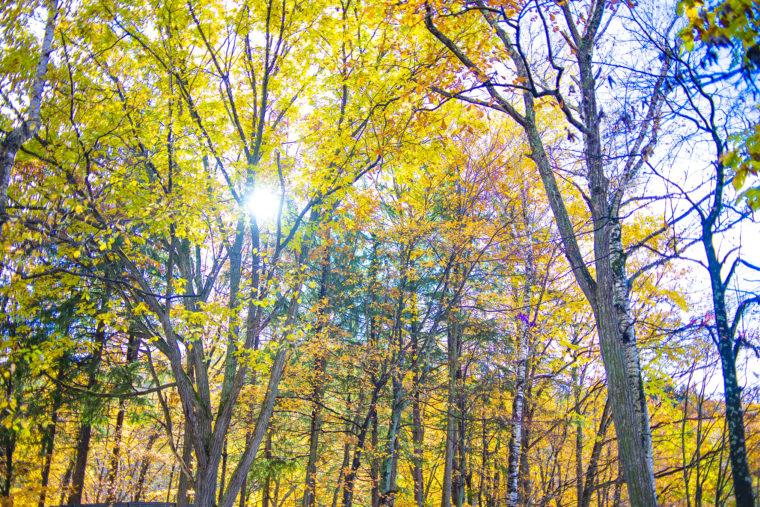 旭山動物園秋の景色