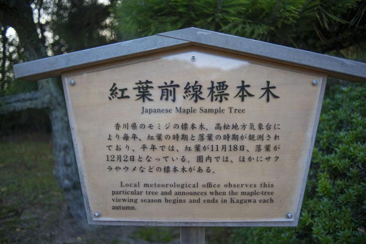 紅葉前線標本木
