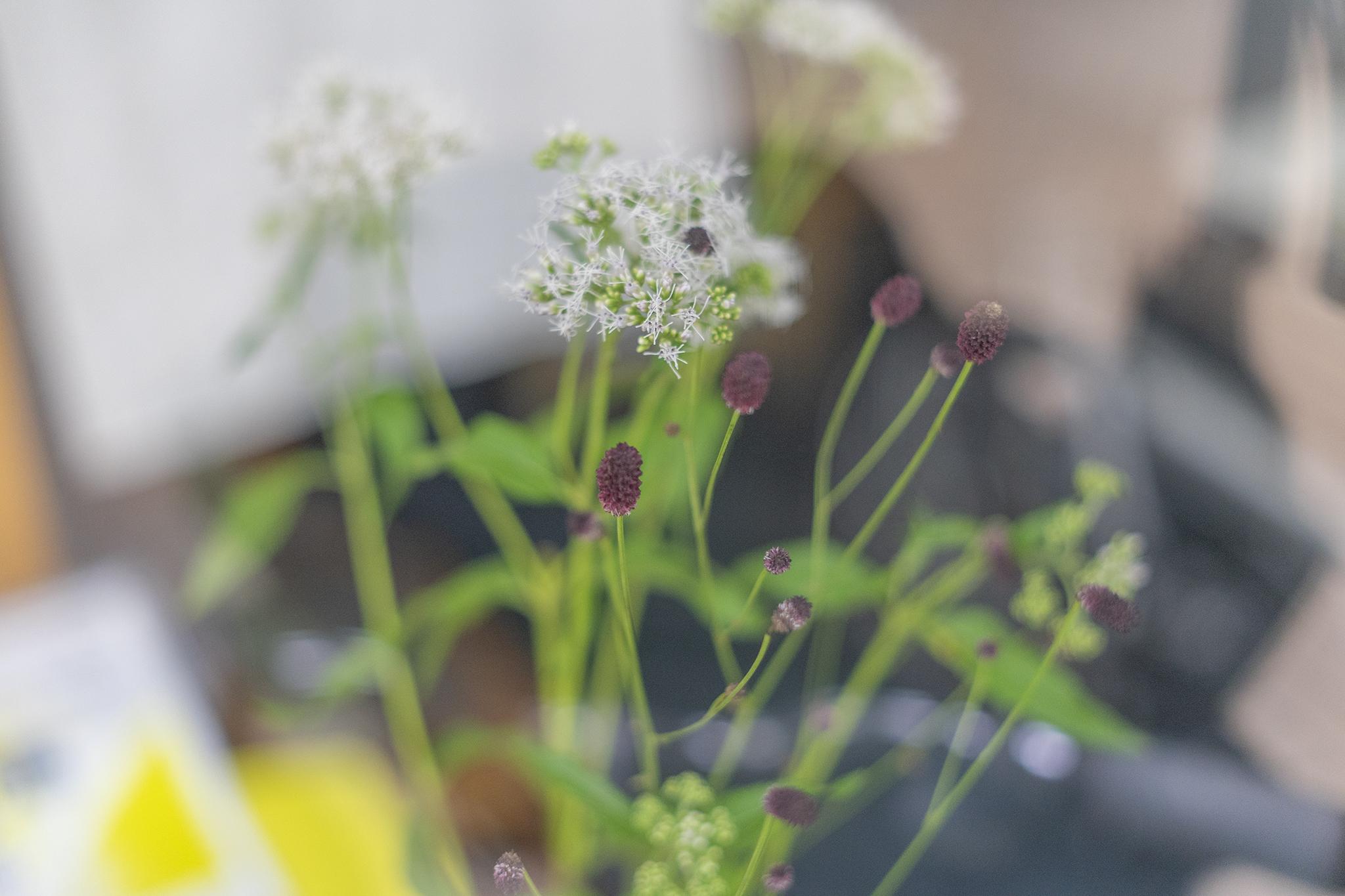 ワレモコウの花言葉と誕生花