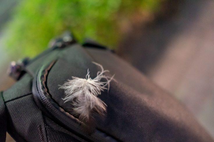 舞い降りた鳥の羽