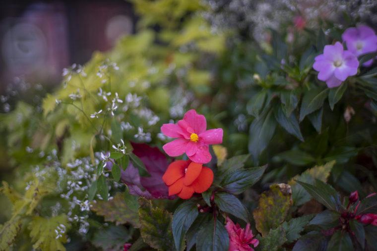 白い恋人パークの花