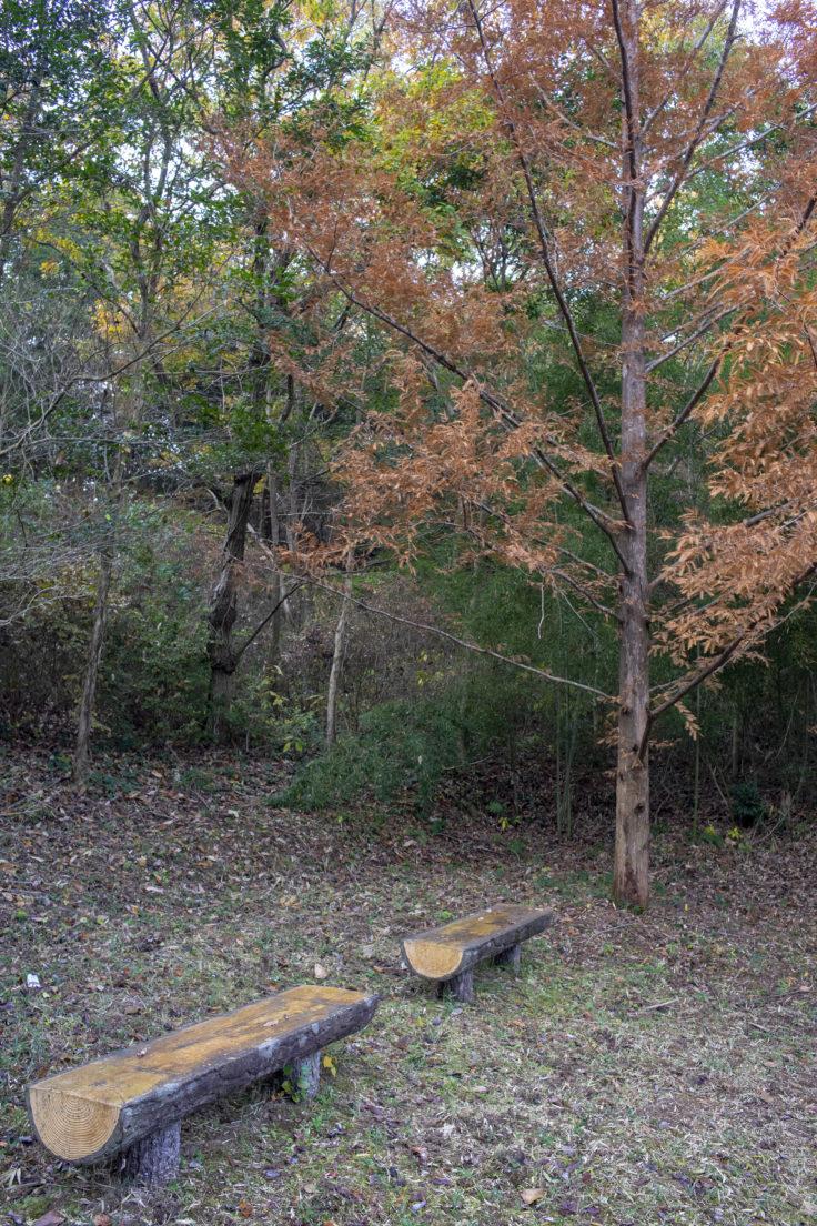 太古の森のベンチ