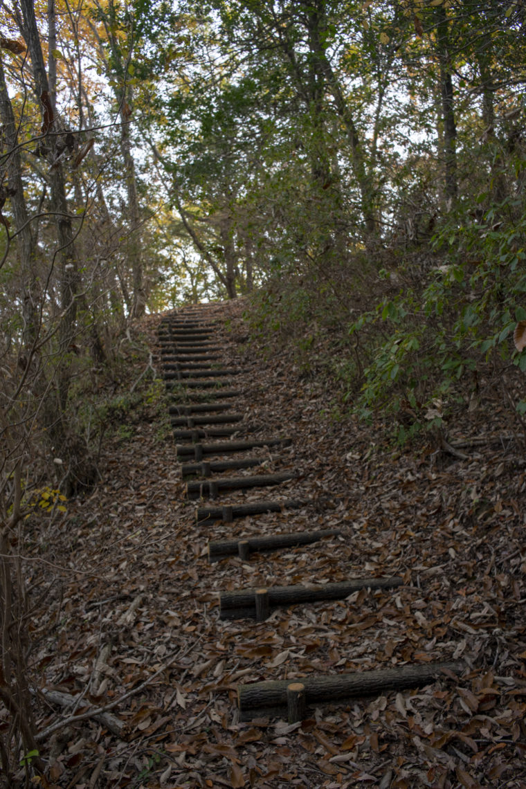 太古の森の階段