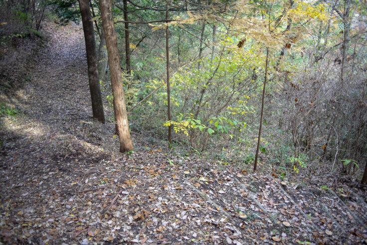 太古の森の山道分岐