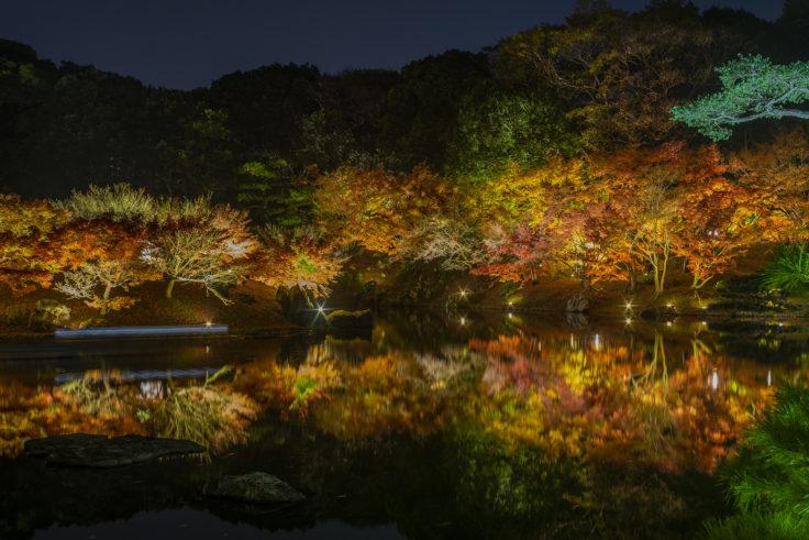 栗林公園の紅葉ライトアップ2