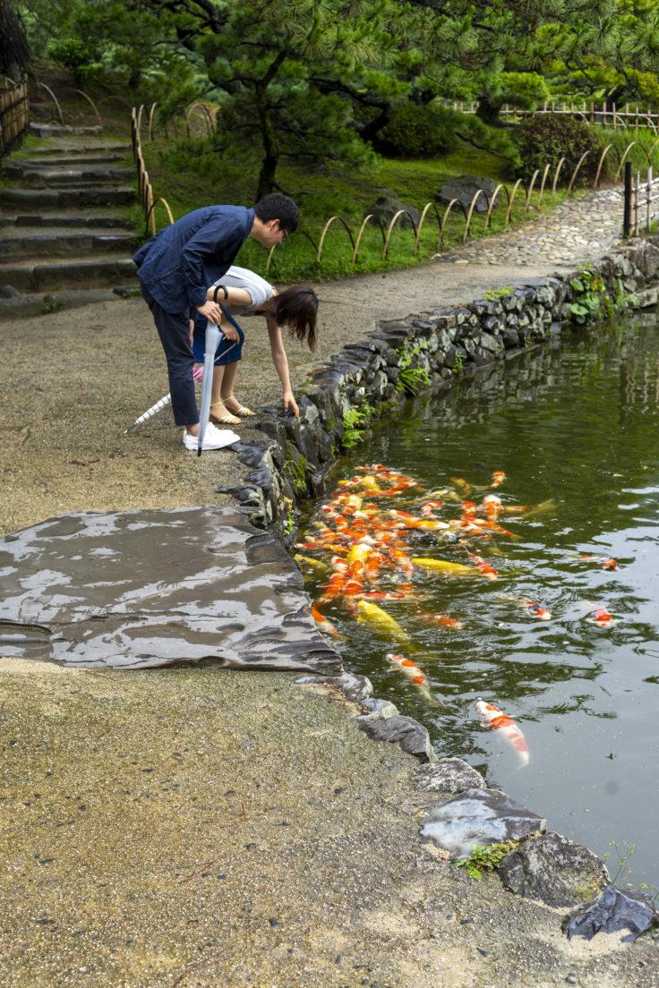 吹上亭の鯉とスッポン