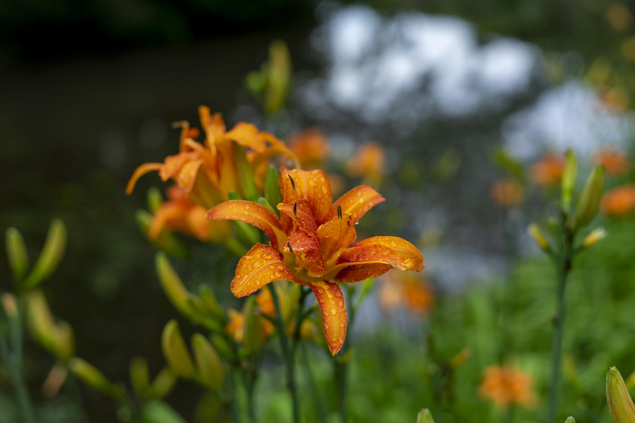 栗林公園で単焦点50mmスナップ写真を撮る。【ZEISS Loxia 2/50】