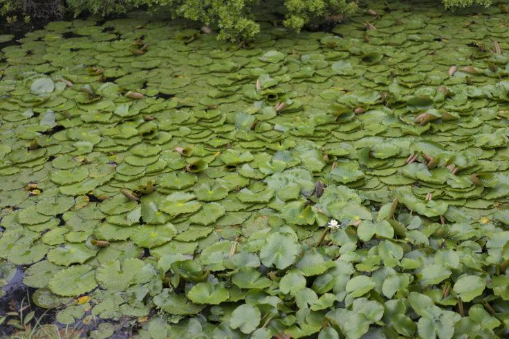 屋島血の池