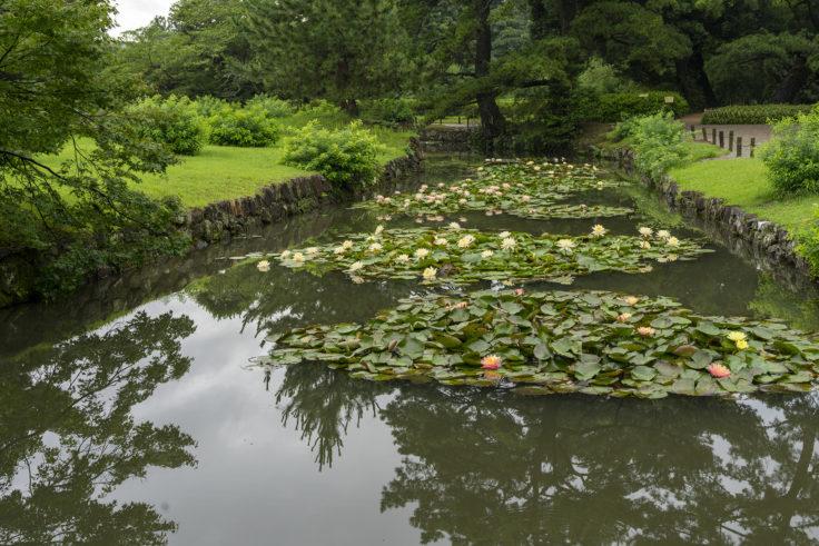 潺嵈池(せんかんち)のスイレン1