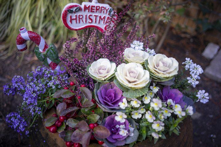 須磨離宮公園のクリスマス寄せ植え2