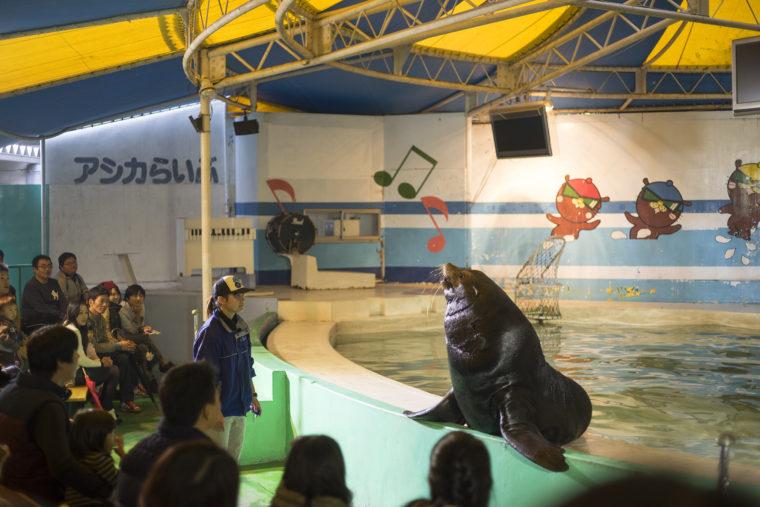 新屋島水族館のアザラシ