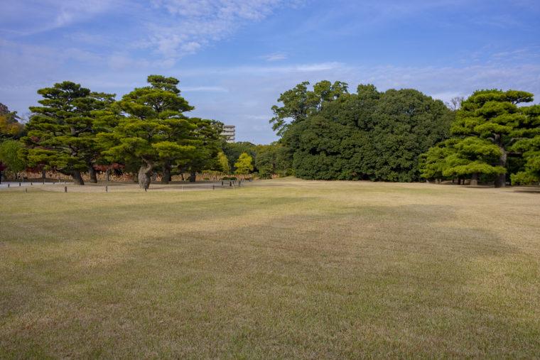 檜御殿跡の松2