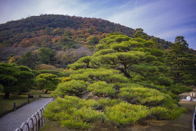 鶴亀松裏側