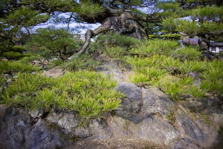 鶴亀松の亀の石組み