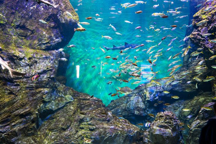 四国水族館の水槽