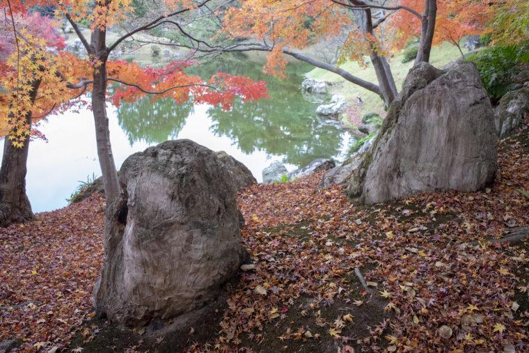 楓岸にある珪化木