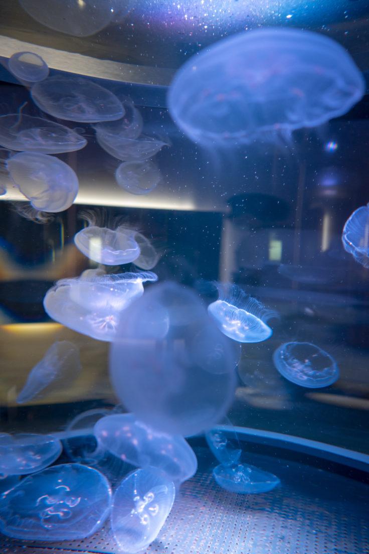 四国水族館のクラゲ2