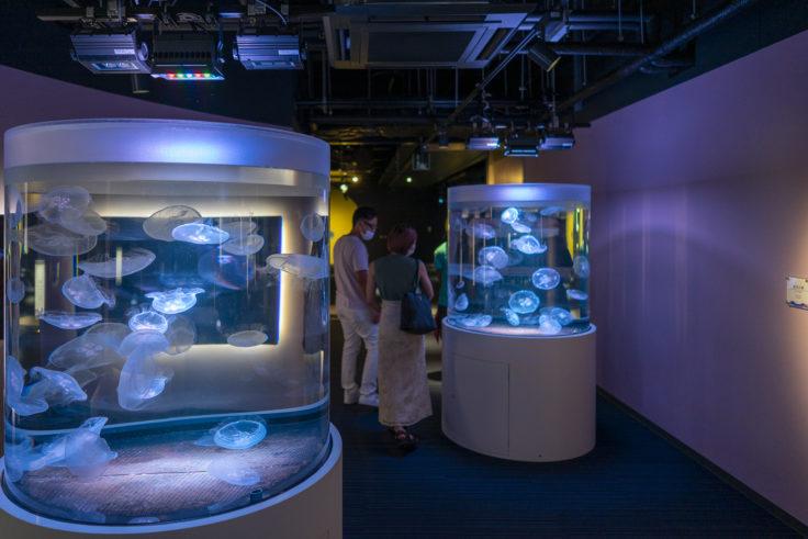 四国水族館のクラゲ4