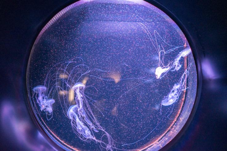 四国水族館のクラゲ7