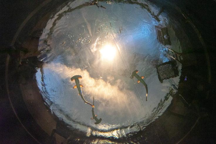 四国水族館神無月の景
