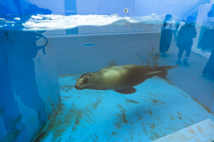 四国水族館のアシカ