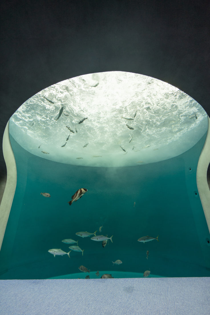 四国水族館渦潮の景
