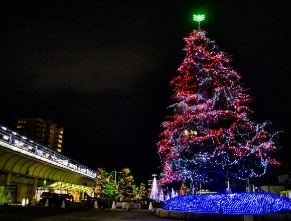 坂出駅のヒマラヤスギイルミネーション